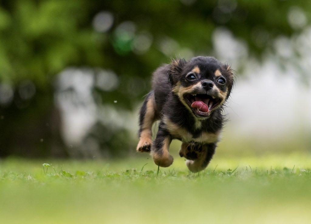 glad hund utomhus sveland