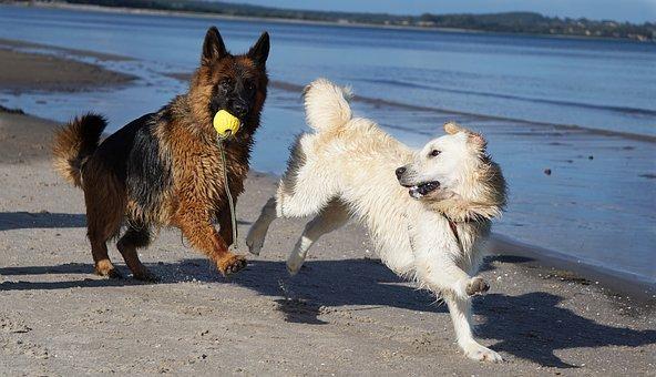 Begränsningar hundraser
