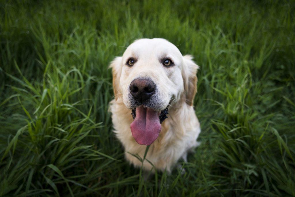 Giftiga livsmedel för hundar