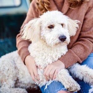 Informationskväll om hundförsäkringar