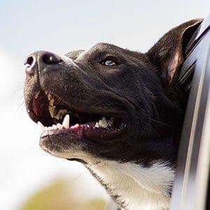5 tips inför hundförsäkring 300x300