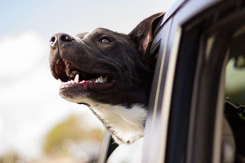 5 tips inför hundförsäkring