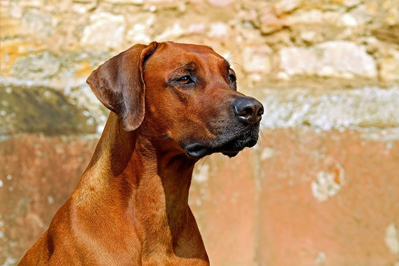 bäst hundförsäkring 2020