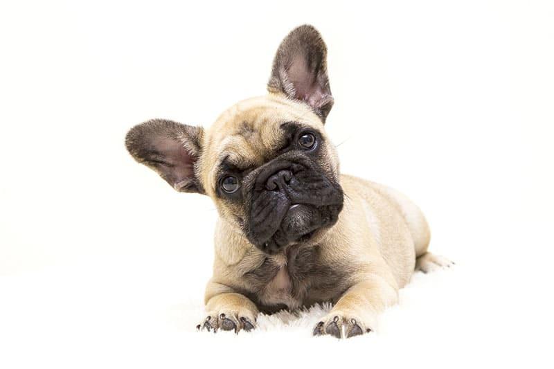 Jämför hundförsäkring start