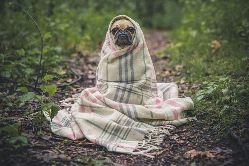 hund ensam
